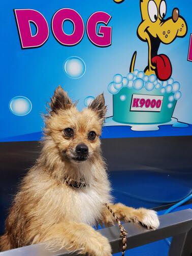 DIY Dog Wash Station Raymond Terrace